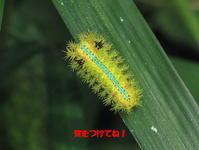 ■■危険な虫にご用心!■■ - Sippo☆のネイチャー探索記 2