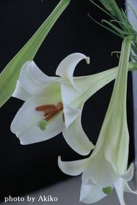 盆の入り - Blanc de Blancs