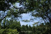 涼を求めて~♪六甲高山植物園 - miyorinの秘密のお庭