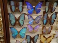 蝶のコレクションを見に行く - blueletter