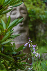 高麗神社の花 - デジカメ写真集