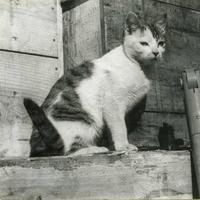 南極で越冬した猫タケシを知っていますか? - ― Metamorphose ―