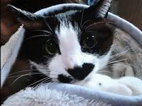 【本日のハチワレさん】総集編・前半 - 湘南藤沢 猫ものの店と小さなギャラリー  山猫屋