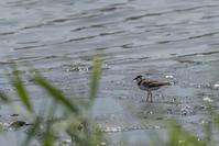 干潟の鳥の予定が・・・ - おおやのデジスコ散歩道