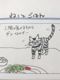 猫マンガ   ねことごはん - ~メインクーンと一緒~デナちな日々