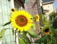 アシナガバチの巣と花 - 美鈴とトラと私とお庭
