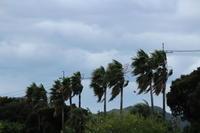 台風前 - 猪こっと猛進