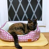 猫ベッドへのこだわり - にゃんず日記