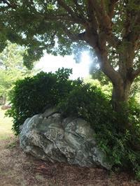 夏の水元公園で4 - はーとらんど写真感