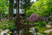 石楠花咲く三千院(前編・聚碧園~宸殿) - 花景色-K.W.C. PhotoBlog