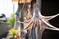 干し蛸 - ホンテ島 日記