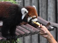 2019年8月王子動物園2その3トワイライトズー - ハープの徒然草