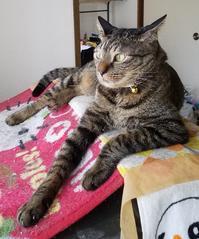 台風10号前日 - キジトラ猫のトラちゃんダイアリー