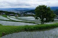 雨上がりの朝 - katsuのヘタッピ風景