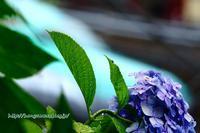 06/22 梅雨空の下で2019「最終章」~その2~ - 本日の夢旅人