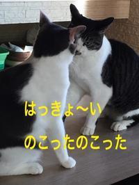 にゃんこ劇場「夏場所!」 - ゆきなそう  猫とガーデニングの日記
