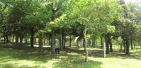 8月10日(土)「いどうこんちゅうかん」~ しあわせの村 2019 ~ - こどもとむしの秘密基地:佐用町昆虫館