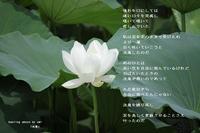 決意 - 陽だまりの詩