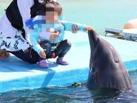 【沖縄旅行③】イルカと海とプールと… - 食日和 ~アレルギーっ子と楽しい毎日~