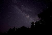 星に願いを - ブナの写真日記