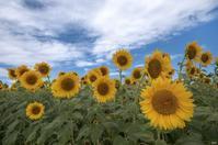 めっちゃ暑過ぎぃ~ - 四季燦燦 癒し系~^^かも風景写真