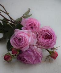 台風接近 - バラとハーブのある暮らし Salon de Roses