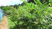 鳥駆逐装置アニックス、千葉のブルーベリー農園で活躍中【鳥獣対策ブログ】 - 鳥獣対策「人と動物の棲み分けを目指して」 byサウンズ情報部【鳥獣対策ブログ】