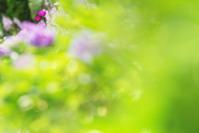 8月14日今日の写真 - ainosatoブログ02