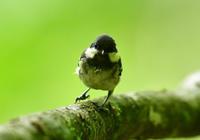 集団で移動 - Love birds !
