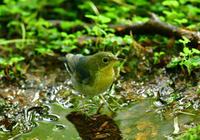 これから水浴び - Love birds !