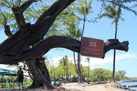 日曜日のLava Lava@2019ハワイ島 - TAMAの卵