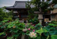 大蓮寺の蓮 - 鏡花水月
