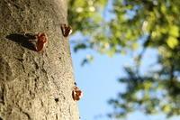 涼しい木陰の蝉 - 木洩れ日 青葉 photo散歩