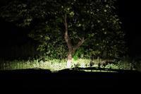 夜の柿の木 - SOLiD「無垢材セレクトカタログ」/ 材木店・製材所 新発田屋(シバタヤ)
