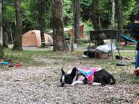 夏のキャンプ - ジルさん