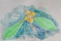 #野草スケッチ #ネイチャー・ジャーナル 『丁子蓼』 Ludwigia epilobioides - スケッチ感察ノート (Nature journal)