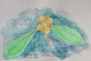 #野草スケッチ #ネイチャー・ジャーナル 『丁子蓼』 Ludwigia epilobioides -