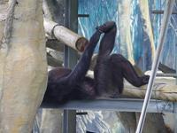 ミツコさん[天王寺動物園] - a diary of primates