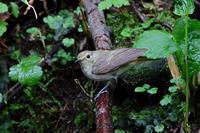 水場頼み。 - 季節の野鳥~Wildbirds archives