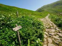 夏の月山花の山 - tokoya3@