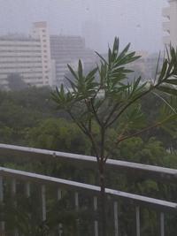 台風とイブ - 【愛と怒涛のけいこ飯】  夫はナニジン?  不思議の国の新・国際結婚