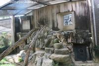 2019年8月王子動物園3その2 - ハープの徒然草
