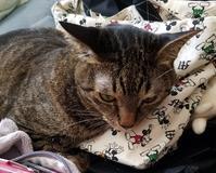 ごちゃごちゃ - キジトラ猫のトラちゃんダイアリー