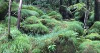 もののけの森 & 「creema」の特集ページに掲載していただけました! - kiihowa blog***