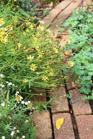 お庭のミイラ&スラム街がヤバい - ペコリの庭 *