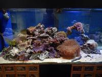 足立区生物園~サンゴの世界と立ち上がるカブトガニ(November 2018) - 続々・動物園ありマス。