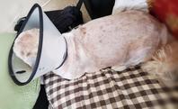 大きくなった?? - きたのさと動物病院 | 札幌白石区・東区 | 一般診療・皮膚科・耳科