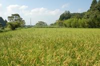 でかい夏? - 千葉県いすみ環境と文化のさとセンター