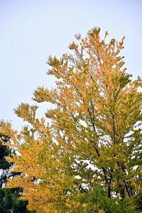酷暑の秋 - 写心食堂