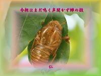 フォト575zqr1604『今朝はまだ鳴く声聞かず蝉の殻』 - 老仁のハッピーライフ